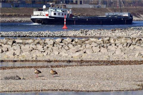 Wasserstand Rhein Aktuell