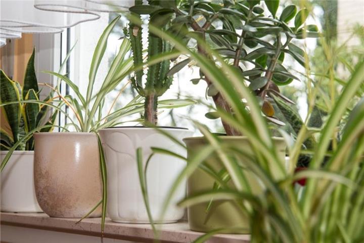Dpa Tmn Berlin Zimmerpflanzen Sorgen Fur Akzente Im Wohnzimmer